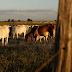 """Brasil suspende exportação de carne para China após casos de """"vaca louca"""""""