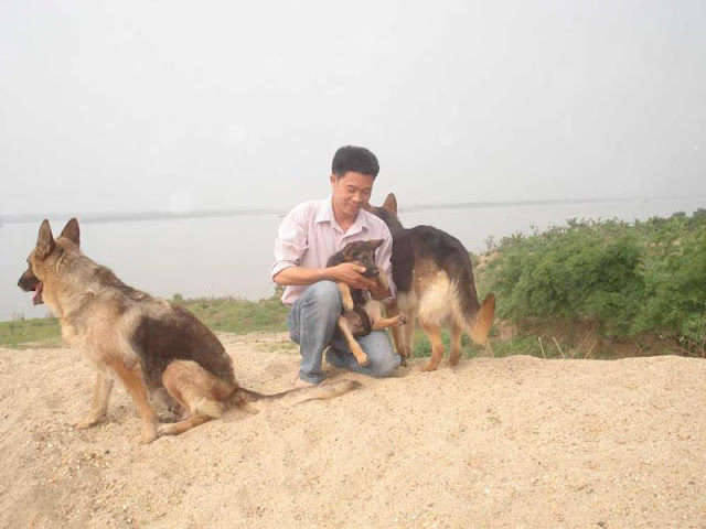Trại chó Sơn Tùng - Mua bán chó becgie đức thuần chủng ở Hà Nội