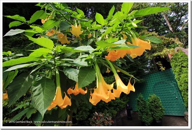 160906_Butchart_Gardens_0164