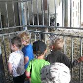 K1A en K1B Naar de kinderboerderij