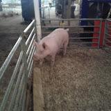Fort Bend County Fair 2012 - IMG_20121006_192218.jpg