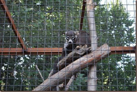 08-17-16 Boise Zoo 02