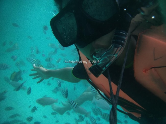 snorkeling pulau redang_16