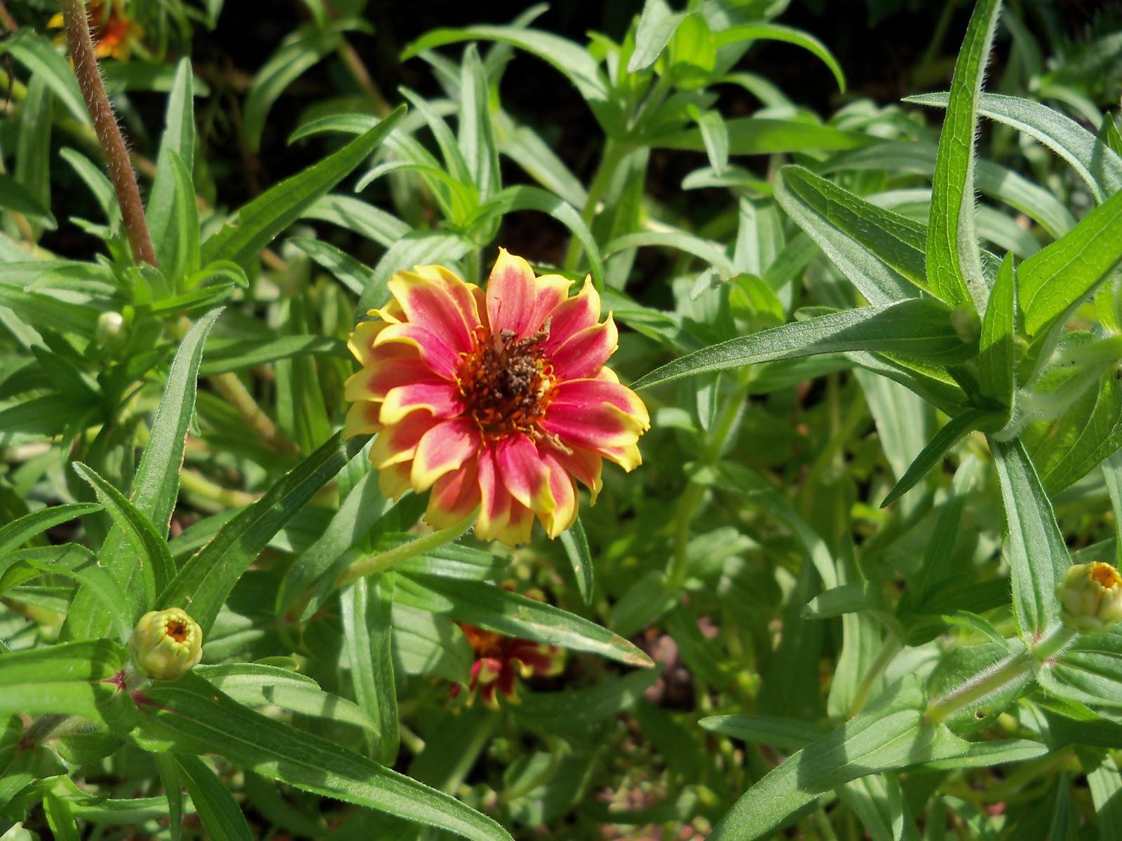 Gardening 2010, Part Three - 101_3692.JPG