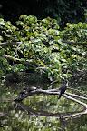 2 Turtles & A Bird in Reserve Zone (Manu National Park, Peru)