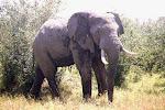 Kenya 1996 & 2001