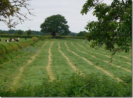 1 hayfield