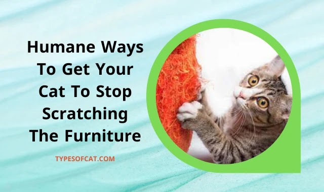 Humane Ways To Get Your Cat To Stop Scratching The Furniture