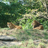 Pittsburgh Zoo Revisited - DSC05103.JPG