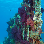 "Soft corals at the ""Toilet wreck"" at Yolanda Reef"