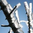 tn_lachaux-2010-12-55.jpg