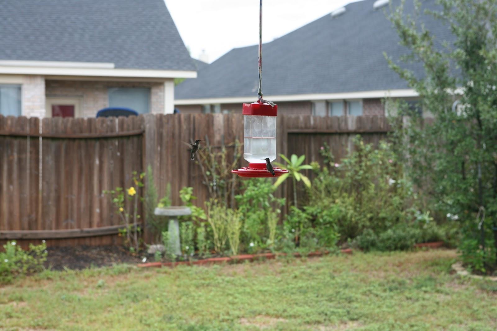 Gardening 2011 - IMG_3051.JPG