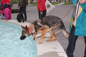 Heratorpets Anschie testar en fontän i Linköping