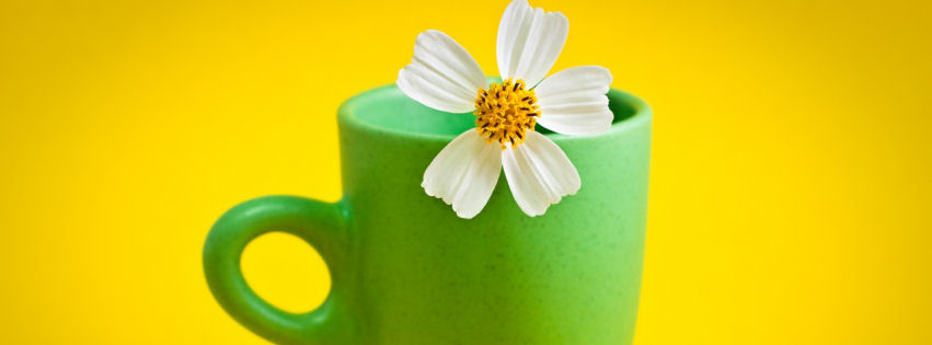 Flower cup facebook cover