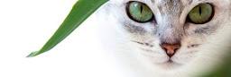 Photo de couverture du profil
