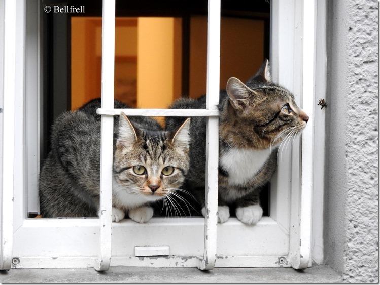 Katzen am Fenster 2
