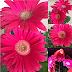 Tanam Bunga sebagai terapi mata dan juga emosi!