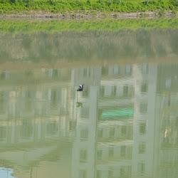 Sculler på Arno floden Firenze