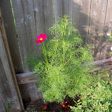 Gardening 2010, Part Two - 101_2873.JPG