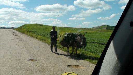 Man aan het werk met ezel