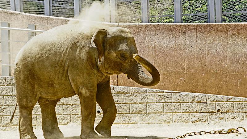 多摩動物公園 ゾウ 写真1