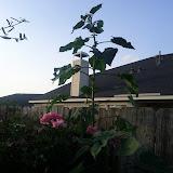 Gardening 2013 - IMG_20130523_192044.jpg