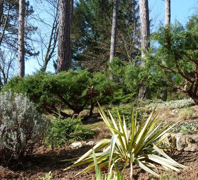 Les pins noirs nettoyage de printemps dans la pin de for Nettoyage jardin printemps