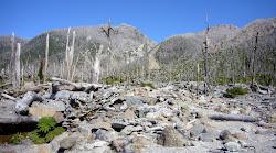 Forêt dévastée par le volcan El Chaitén