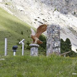 Wanderung auf die Pisahütte 26.06.17-9052.jpg