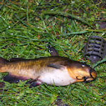 20140417_Fishing_Shpaniv_002.jpg