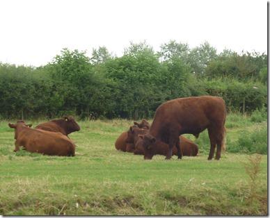 4 lovely steak beef at newbridge