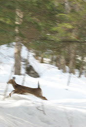 deer crossing brook.jpg