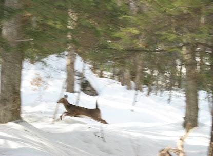 deer crossing brook.jpg