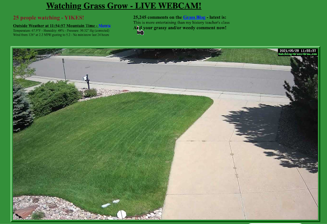 veja-grama-crescer-online-e-ao-vivo