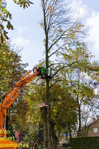 Bomen gekapt Museumlaan in overloon 20-10-2014 (21).jpg