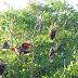 so viele Vögel