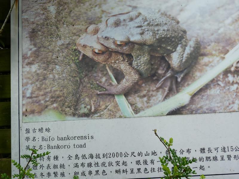 TAIWAN Dans la region de Hualien. Liyu lake.Un weekend chez Monet garden et alentours - P1010647.JPG