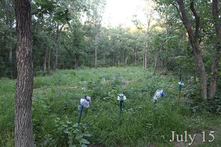 July 15 wild area
