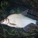 20140717_Fishing_Basuv_Kut_007.jpg