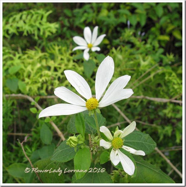 12-15-daisy-tree