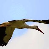 Vogels en dieren - IMG_7279.JPG
