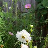 Gardening 2010, Part Three - 101_5198.JPG