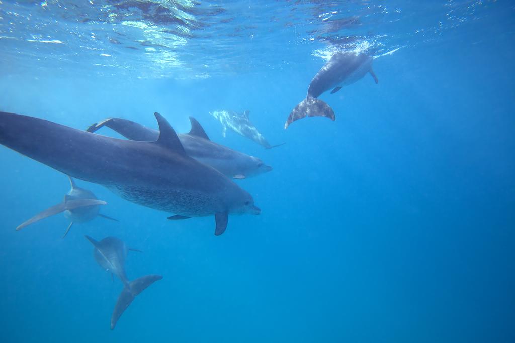 Dolphins Tour, Kizimkazi, Zanzibar Archipelago, Tanzania