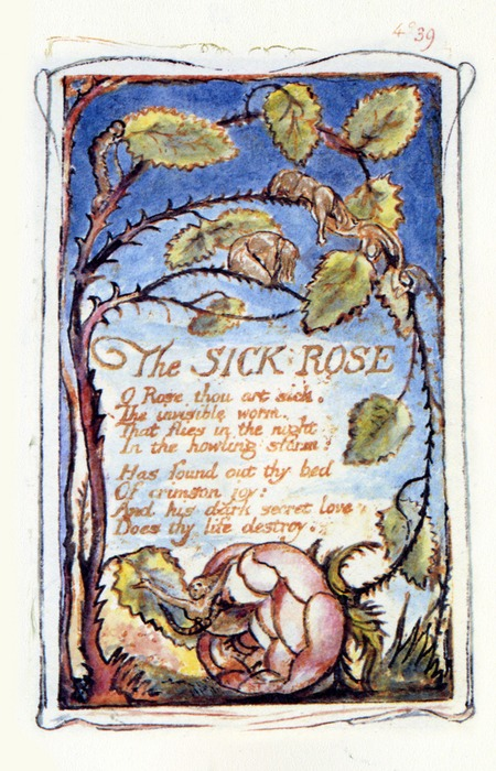 The Sick Rose By William Blake, William Blake