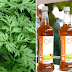 COVID-19: Plant extract in Madagascar's herb grows in Nigeria – FG