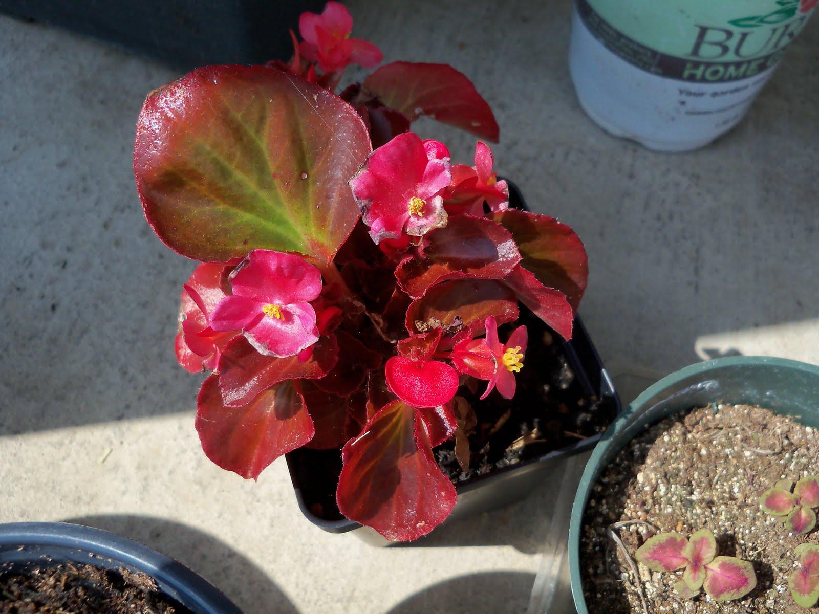 Gardening 2010 - 101_1727.JPG