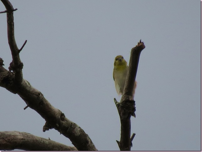 birdIMG_0786