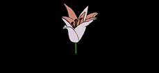 chrimaluxe-logo