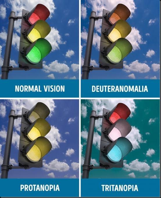 perbandingan mata normal dan buta warna