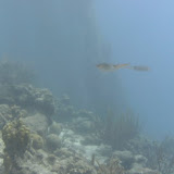 Bonaire 2011 - PICT0054.JPG